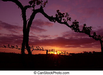 Grape Vine Silhouette