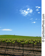 Vineyard and Blue Sky