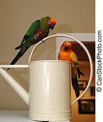 Birds Water Pot - Two tropical birds hang out on a plant...