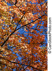 Close Up Leaves - 761