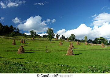 green summer - peacefull green pasture with hay stacks