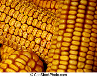 corn cobs background
