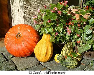 pumpkin sorts