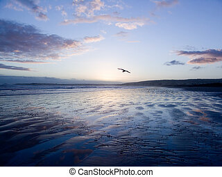 Bird Gliding over Sand - Bird Flying at Sunset