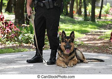 policía, perro, 2