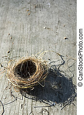 Birds Nest - Birds nest on table