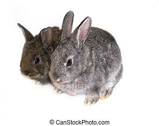 two bunnyes on a white background
