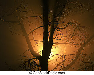 Ghost story - scary naked tree in the fog illuminated from...