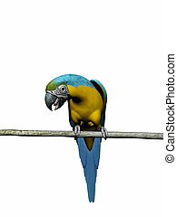 Macaw, parrot over white. - Colorful macaw,parrot 3D render,...