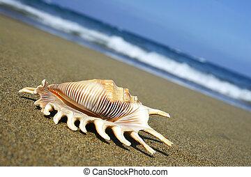 Seashell on Shore with angled horizon