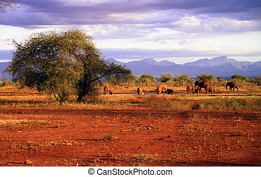 Elephants - A herd of elefants at a Waterhole in the Tsavo...