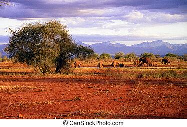 Elephants - A herd of elefants at a Waterhole in the Tsavo...