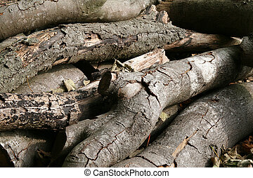 Forest logs - pile of logs in forest