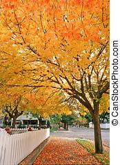 fall colors,sidewalk - fall scene,fence,sidewalk,tree