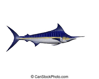 Blue Marlin - Isolated blue marlin