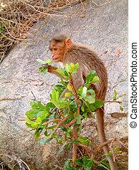 Monkey in bush