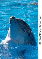 dauphin, headshot