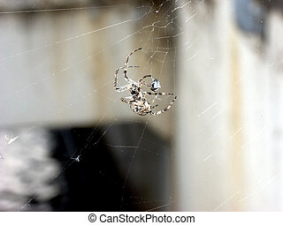 Spider with prey. - A spider in its web, packing in the...