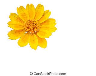 Wild Yellow Flower - Macro shot of a wild yellow flower,...