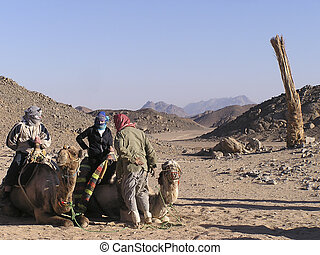 Adults tourists on camels 2