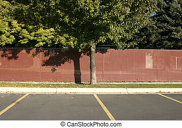 Tree in a Parking Lot - Fenced Tree in a Parking Lot