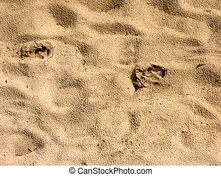 Footprints of a dog - Footprints of a dog in the sand