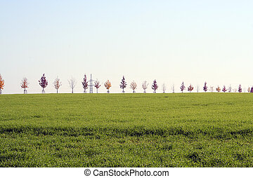 Growing trees. - Growing trees in a row in horizon of a...