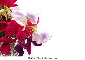 sweetpea flowers - bunch of sweetpea flowers with space to...