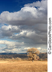 lone tree - lonesome tree under dramatic sky