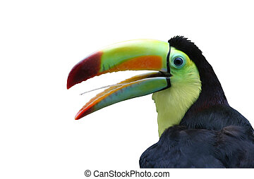 Toucan, Isolated - Profile of a Toucan, close-up, isolated...