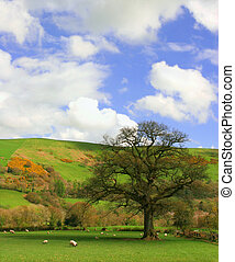 The Pasture - Field in springtime set amongst the hills with...