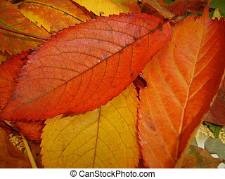 Autum Leaves - Seasonal Autumn Leaves