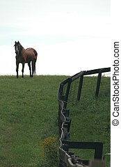 horse 60   in field room for copy  (artistic soft focus)