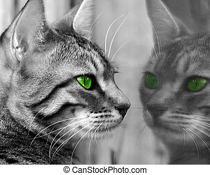 Green Eyed Monster - A Bengali special breed kitten with...