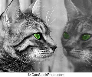 vert, observé, monstre