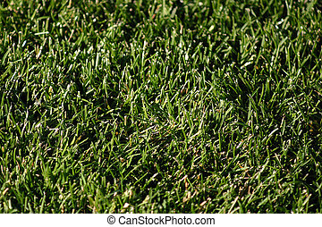Grass Background - grass background for many purposes