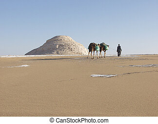 Camels in Sahara - Two camels and their Bedoin driver in the...