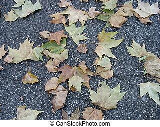 leaves 4 - leaves
