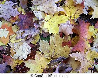 Fall - Colourful fall