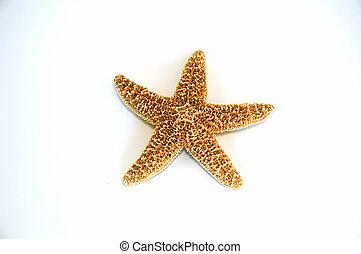 Starfish - Single isolated starfish