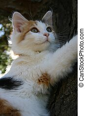 Up a tree - Frightened kiten clings to tree