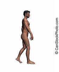 Anatomy of the man walking 4. - Anatomically correct model...