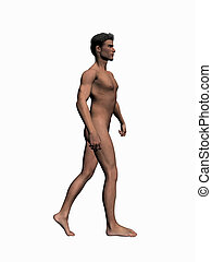 Anatomy of the man walking 2. - Anatomically correct model...