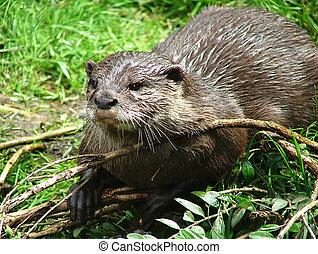 Otter - 6 - Otter