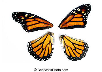 Butterfly Wings - Monarch butterfly wings