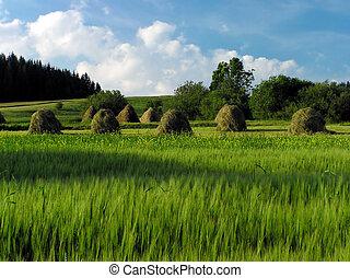 Haymaking - Meadows
