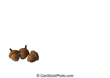 Isolated Acorns Left - Three acorns isolated on a white...