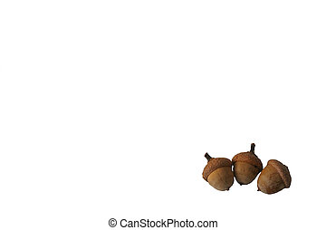 Isolated Acorns - Three acorns isolated on a white...