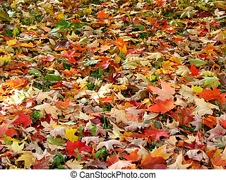 Fall leaves background - Fall maple leaves background