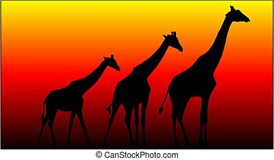 Giraffes - Three Giraffes against a orange sky